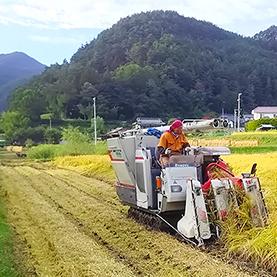 米作りに適した地域<br /> 特性と環境に<br /> 合わせた農作業