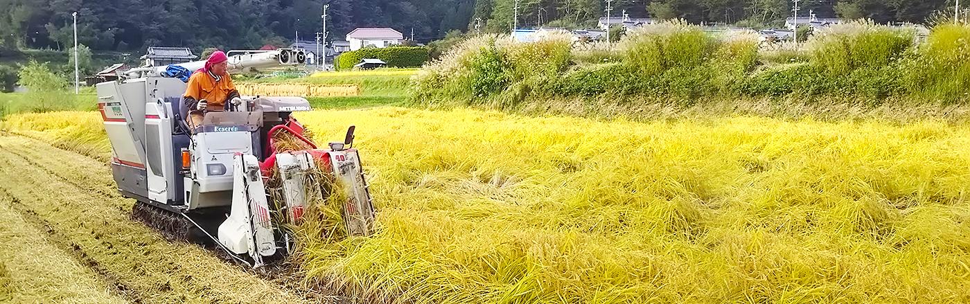 信州上田いずみファーム 若手農家の誇り。安心・安全・おいしいさに一生懸命