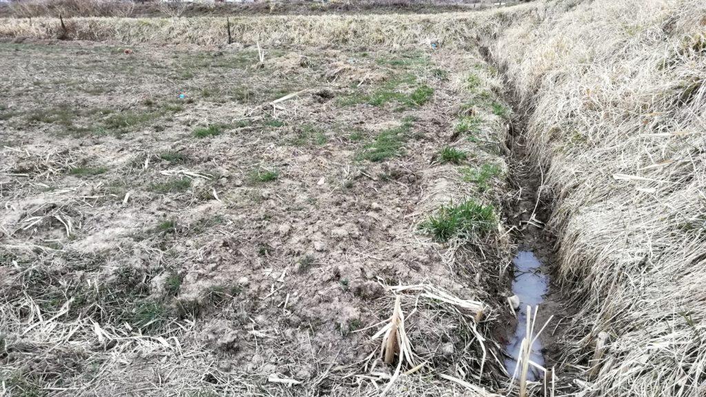 湿気た田んぼが乾く